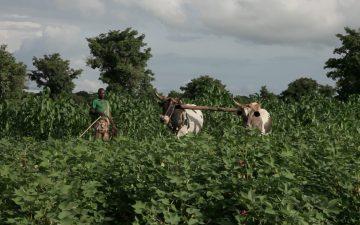Afrika Tiss_Burkina Faso_Ecologie_Coton Biologique_UNPCB, Helvetas, coton ogm, coton conventionné