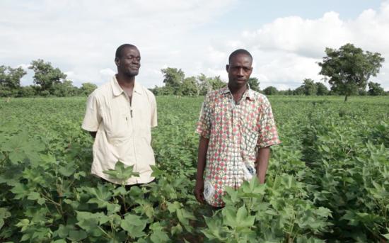 Producteurs de coton du Burkina Faso, région de Houndé
