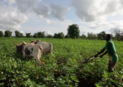 Les producteurs de coton du Burkina Faso